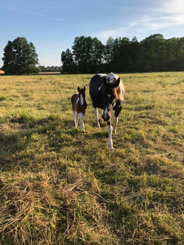 Nachwuchs auf der Ranch